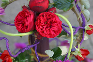 English Rose - Trend flower 2011, Fall to Winter