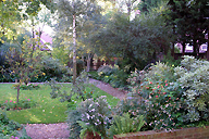 private garden, Hammersmith London
