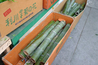 Bamboo for new year decoration