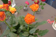 New Variety of orange rose