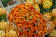 Strong Orange ranunculus